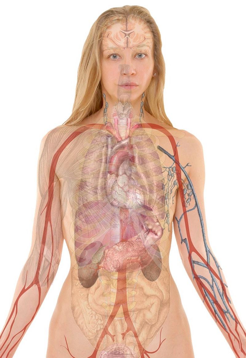 Your body has detoxing organs