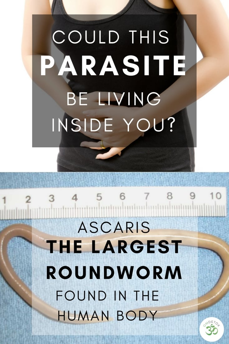 Ascaris intestinal worms affect 1.2 billion people world wide. They are the largest intestinal roundworm to affect the human body