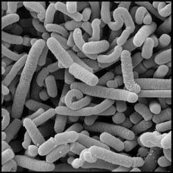 OMDetox Probiotics - 7 Day Detox
