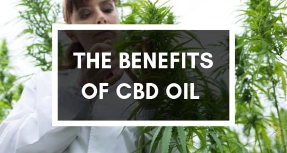 the benefits of CBD oil from the hemp plant