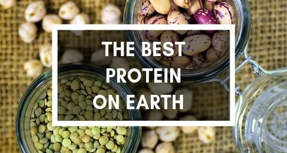 What is the best protein source on Earth? pictures of beans