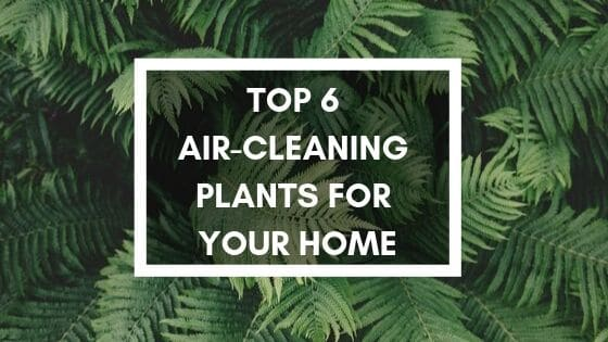 air-cleaning plants for your home